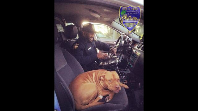 New officer is visited by friendly dog