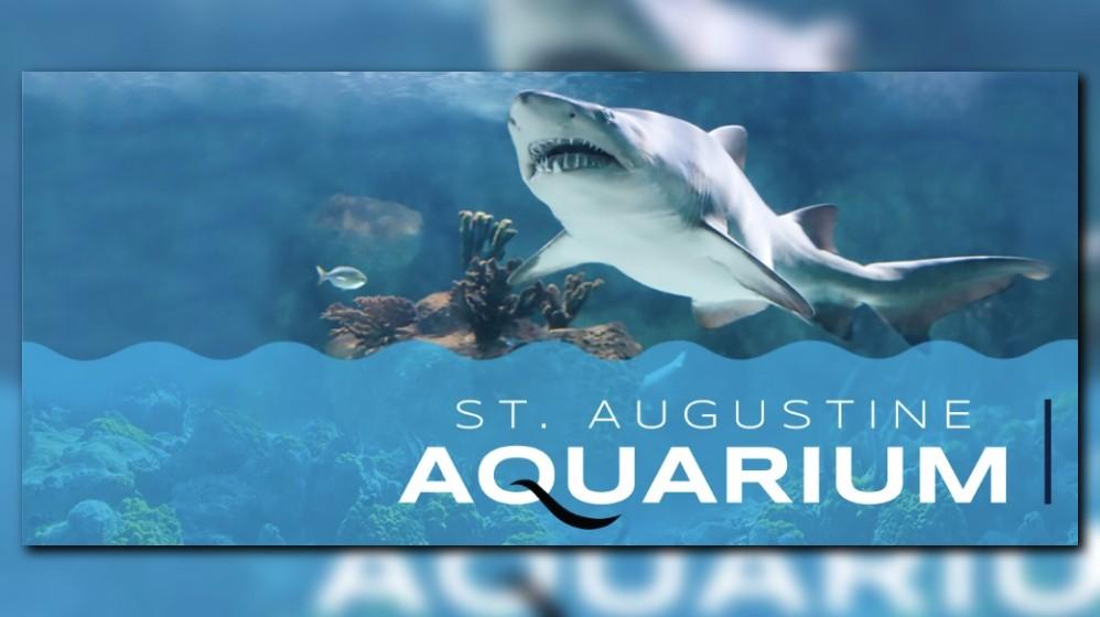 St Augustine Aquarium Snorkel Adventure Opening Monday