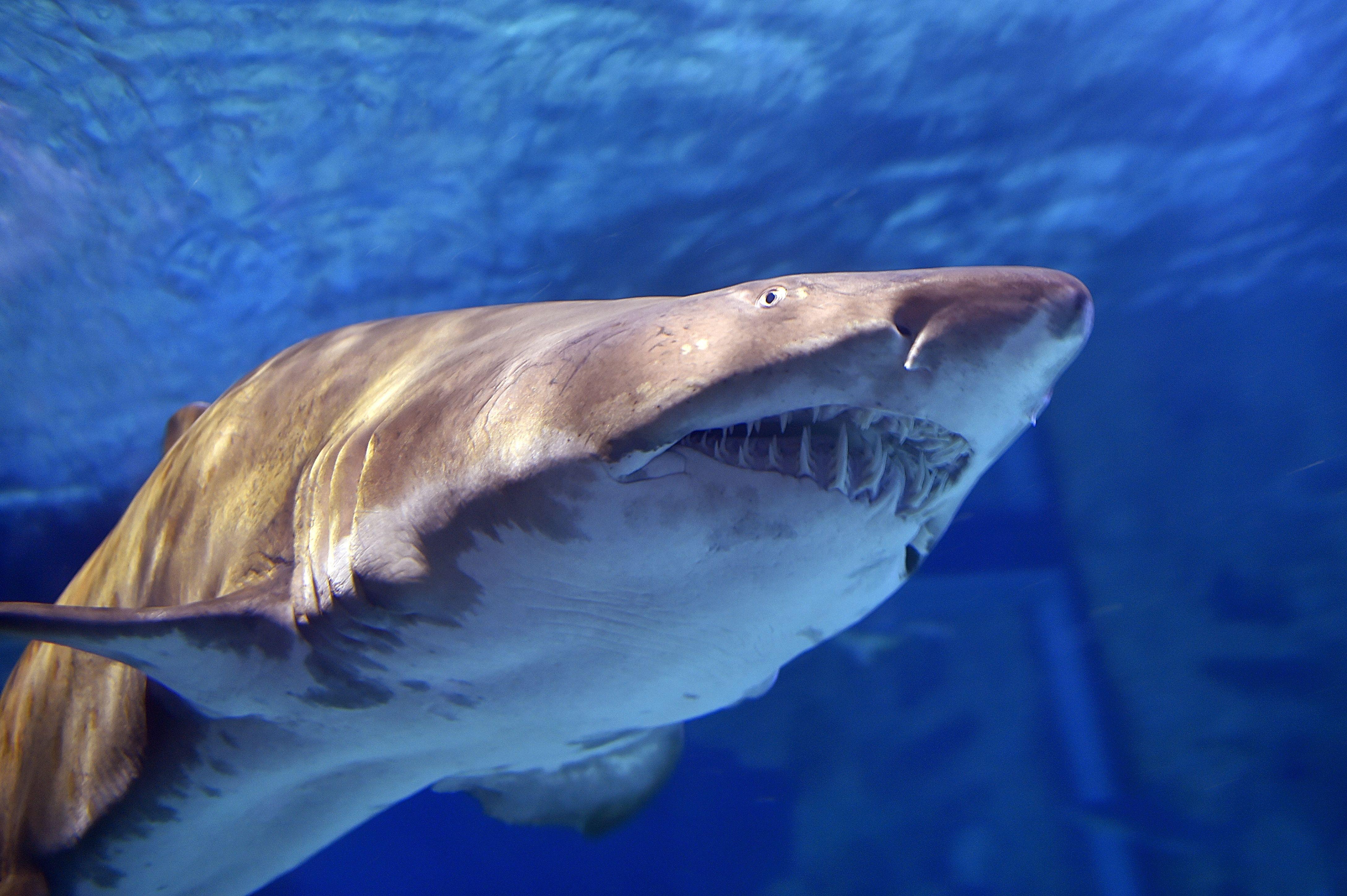 Shark Bites Both Legs Of Swimmer Off Florida Beach